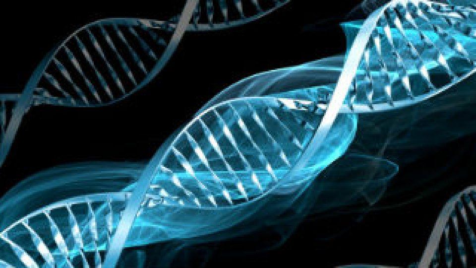 genotype